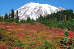 Mt. Rainier Fall Colors Stock Photography
