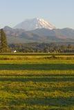 Mt Rainier Farmhouse and Field. Mt Rainier Farmhouse Corn Field and Forested Background near Enumclaw Washington State Royalty Free Stock Photo