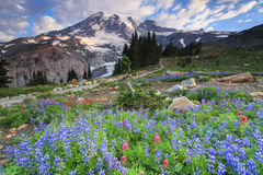 Mt. Rainier and flowers Royalty Free Stock Photos