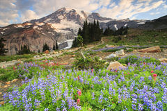 Mt. Rainier and flowers royalty free stock images