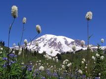 Mt. Rainier in July. stock images
