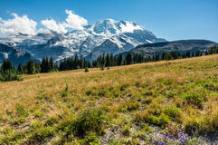 Mt Rainier Landscape images libres de droits