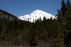 Mt. rainier from longmire Royalty Free Stock Photos