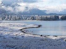 Mt Rainier National Park imágenes de archivo libres de regalías