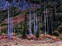 Mt Rainier National Park Changing Colors y árboles muertos fotos de archivo