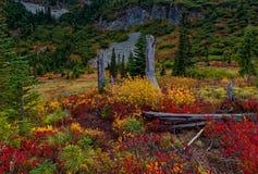 Mt Rainier National Park Changing Colors y árboles muertos fotografía de archivo