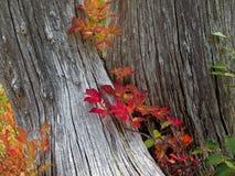 Mt Rainier National Park Changing Colors y árboles muertos foto de archivo libre de regalías