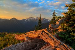 Mt Rainier National Park, Washington Images libres de droits