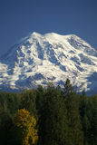 Mt. Rainier Over Treetops Stock Images