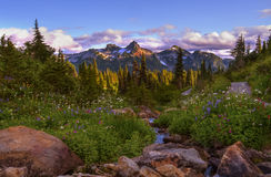 Mt Rainier Paradise Royalty Free Stock Photography