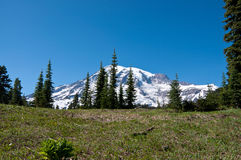 Mt. Rainier scenic landscape Stock Photography