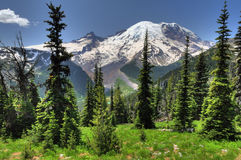 Mt. Rainier from Sunrise Stock Image