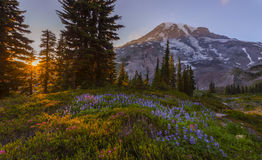 Mt Rainier at Sunset Royalty Free Stock Photography