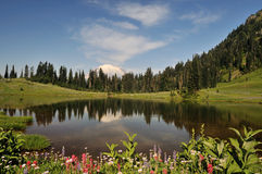 Mt. Rainier and Tipsoo Lake with wildflower Royalty Free Stock Image