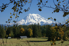 Mt. Rainier Towers over pasture and forest Royalty Free Stock Photography