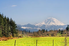Mt. Rainier viewed from across a field Stock Images