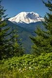 Mt. Rainier Washington State Park views of the peak through the stock images