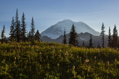 Mt.Rainier and wild flowers Royalty Free Stock Photo