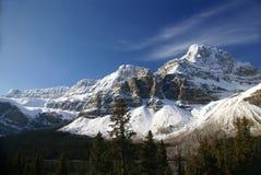 Mt. Rallonge coudée, glacier s'arrêtant Image stock