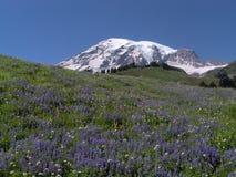 Mt. Ranier en la floración Imagen de archivo