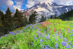 MT Regenachtiger en bloemen Stock Afbeelding
