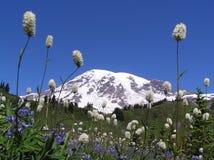 Mt. regenachtiger in Juli. stock afbeeldingen
