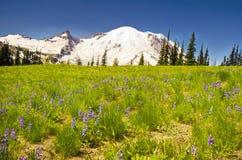 MT Regenachtiger met Wildflower in de voorgrond stock fotografie