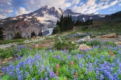 Mt Regnerischer und Blumen Lizenzfreie Stockfotos