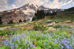 Mt Regnerischer und Blumen Lizenzfreie Stockbilder