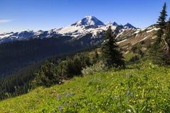 Mt Regnerischer und Blumen Lizenzfreie Stockfotografie