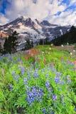 Mt Regnerischer und Blumen Stockbild