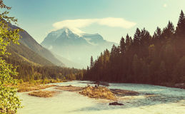Mt.Robson Royalty Free Stock Image