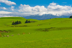 Mt. Ruapehu and fields Royalty Free Stock Photos