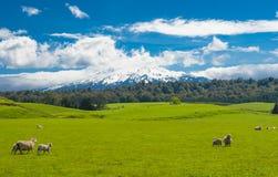 Mt Ruapehu und Felder Stockbild