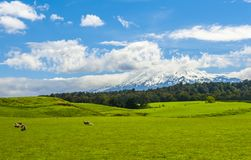 Mt Ruapehu und Felder Lizenzfreie Stockfotografie
