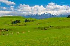 Mt Ruapehu und Felder Lizenzfreie Stockfotos