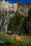 Mt Rushmore土拨鼠 库存图片