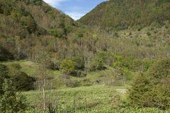 Mt Sajiki krajobraz w Japonia Zdjęcie Royalty Free