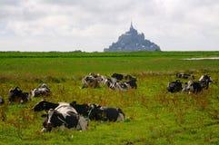 Mt. Sanktt Michel med kor Royaltyfria Bilder