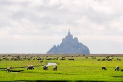 Mt. Sanktt Michel med sheeps Arkivfoton