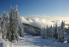 Mt. seymour ski resort with fresh snow Stock Photography