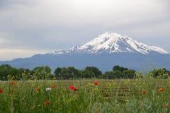 Mt Shasta和野花 图库摄影