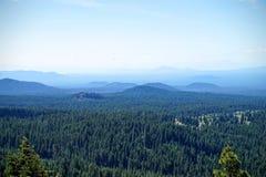 Mt Shasta森林 图库摄影