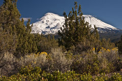Mt Shasta Калифорния Стоковое Фото