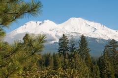 Mt. Shasta achter Bomen Royalty-vrije Stock Afbeeldingen