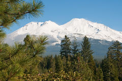 Mt. Shasta Behind Trees. This midday shot of Mt. Shasta was teken in Autumn 2010 from an off ramp of Interstate 5 Royalty Free Stock Images