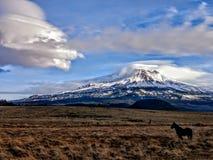 MT Shasta, ca met paard en wolken stock foto's