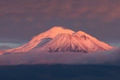 Mt Shasta med alpenglow Arkivfoton