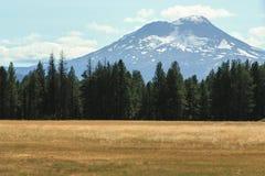 Mt Shasta mit seinen letzten schmelzenden Schneekappen und einer gelben Wiese I stockbild