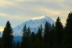 MT Shasta Royalty Free Stock Photos